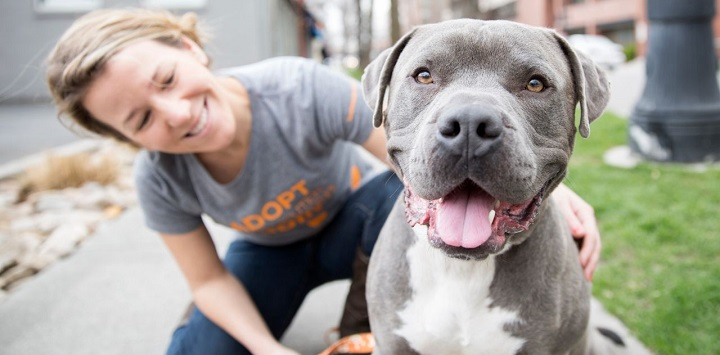 Woman kneeling next to gray pit bull