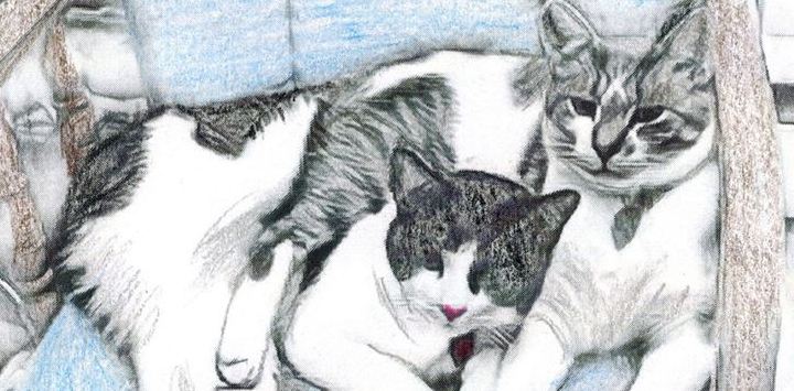 Pencil drawing of two black and white cats lying together