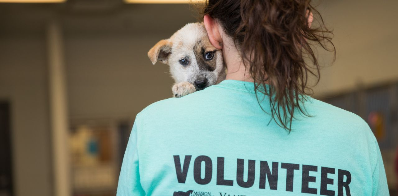 A puppy peers over the should of a person wearing a Volunteer shirt