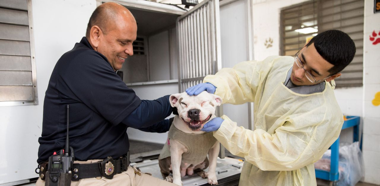 Animal control officer and shelter staff intake a dog