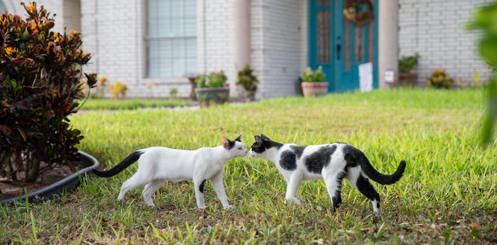 two black and white cats sharing a gentle kiss