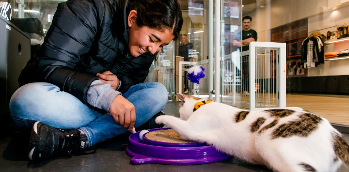 Woman playing with adoptable cat