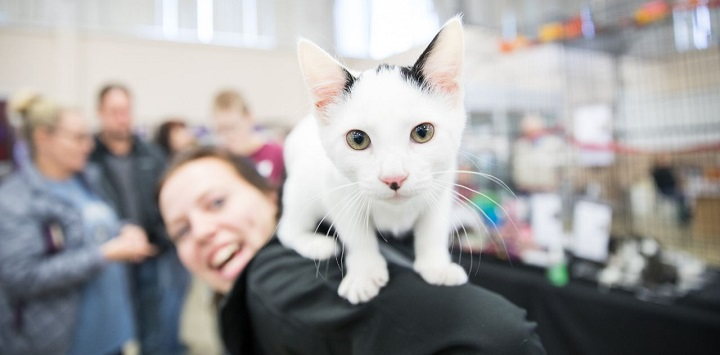 White cat on person's shoulder