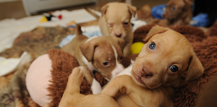 Puppy Protocol: Deworming and Vaccines