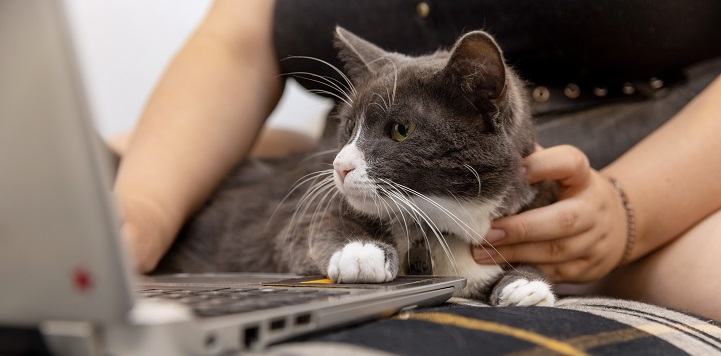 Gray and white cat looking at screen of silver laptop with paw on keyboard