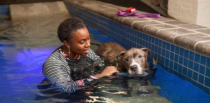 Woman in pool with brown pit bull dog to her right