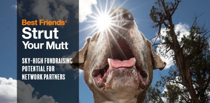 Strut Your Mutt image with dog with mouth open with sun behind it