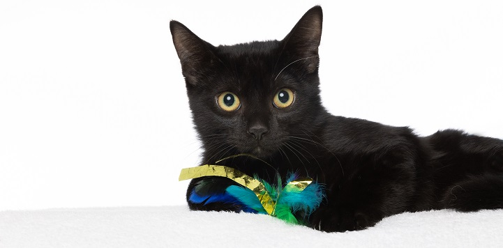 Black cat lying on white bed holding green and yellow toy