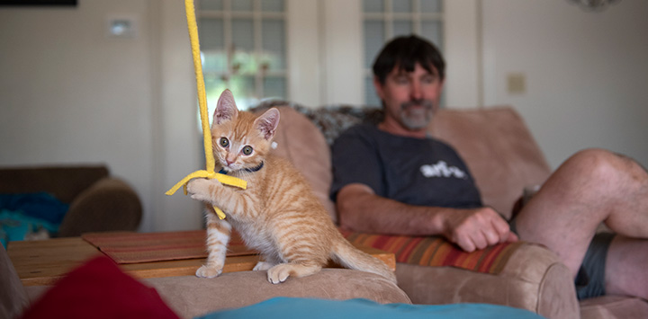 Small orange tabby kitten playing with a wand toy in a home while a man watches from behind