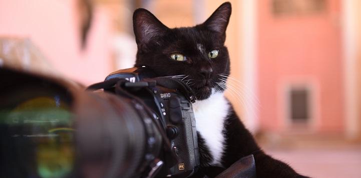 Black and white cat lying behind black camera