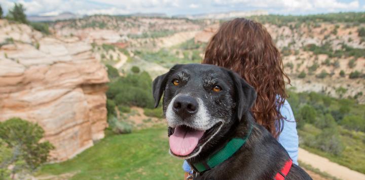 Black dog at Angel Canyon