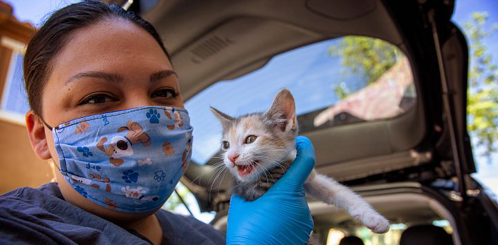 Veterinary technician holds a kitten at a vaccine clinic