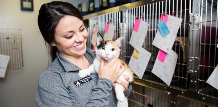 cat in clinic