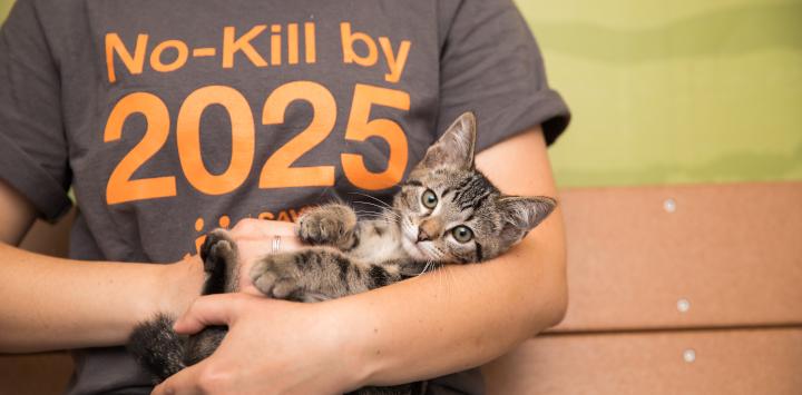 caregiver holding kitten
