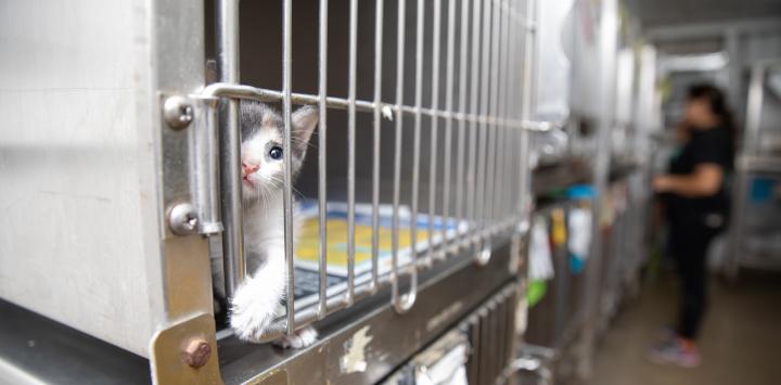 Kitten in animal shelter