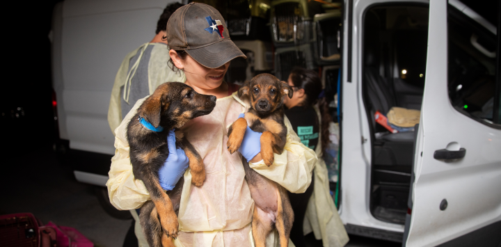 Woman rescuing dogs in texas