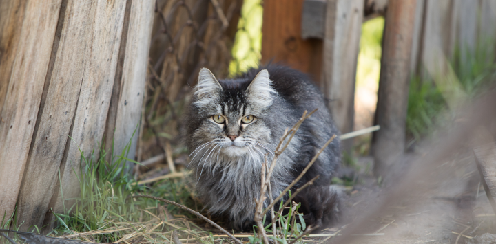feral cat by a fence