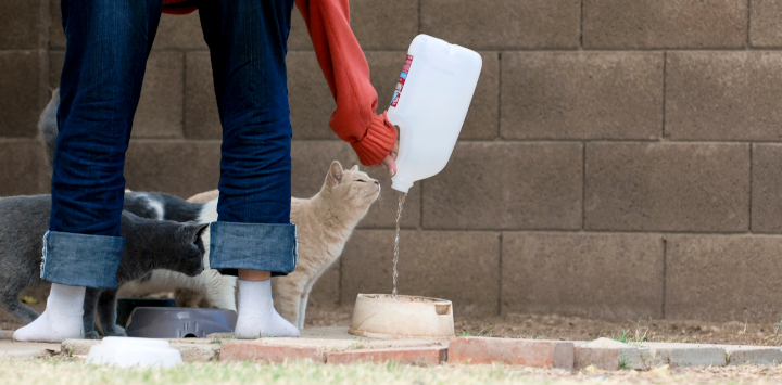 person giving an outdoor cat water