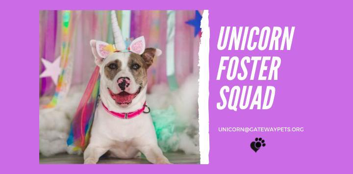 Dog dressed as a unicorn