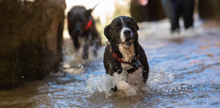 Dog in creek