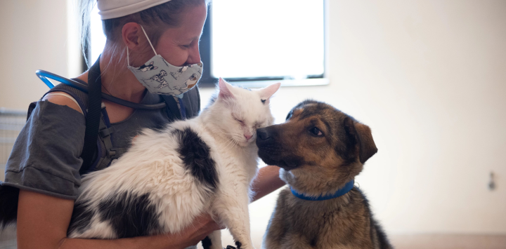 a cat and a dog with an animal caregiver