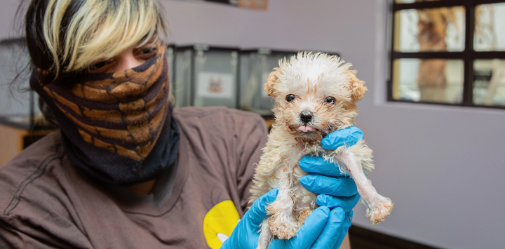 woman holding neonatal puppy