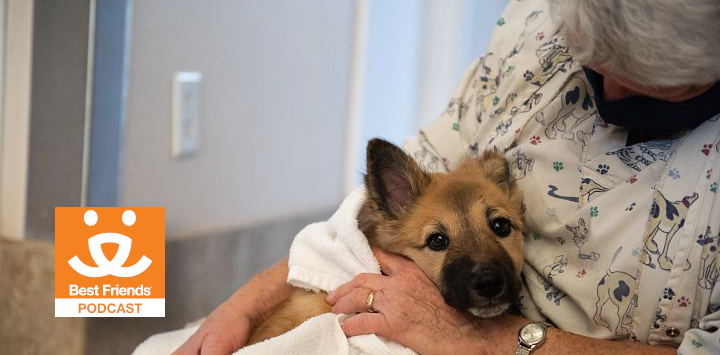 woman caring for a dog at a veterinary clinic