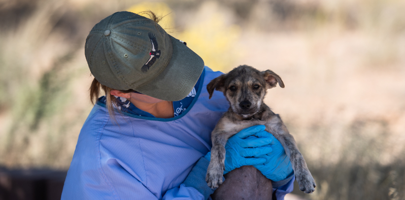 Animal shelter worker caring for puppy in gloves and gown