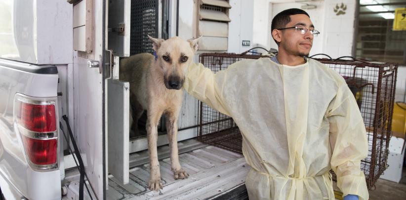 Intake worker with white German Shepherd type dog