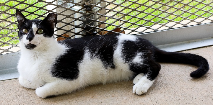 Black and white cat lying in cat enclosure