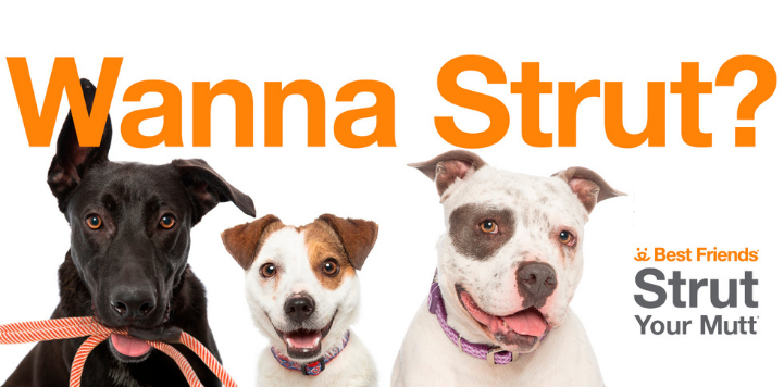 Three dogs with orange collars on white background under the words wanna strut